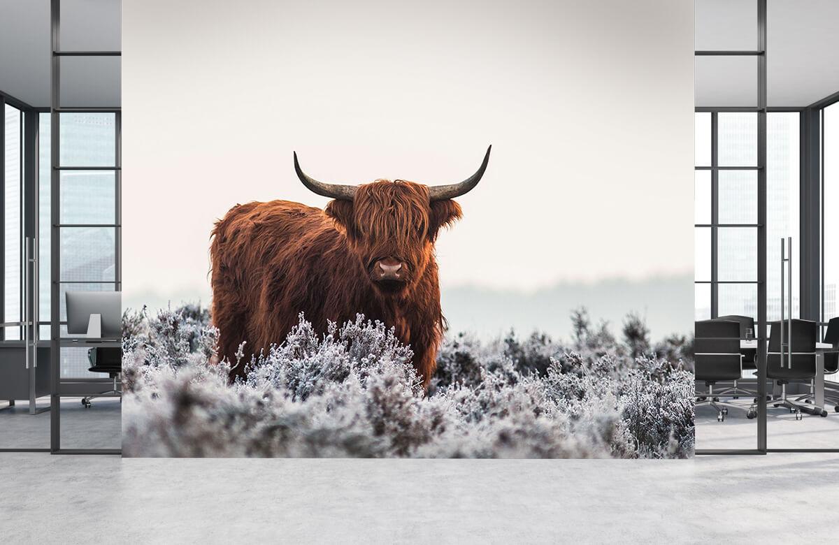 Dieren Highlander 6