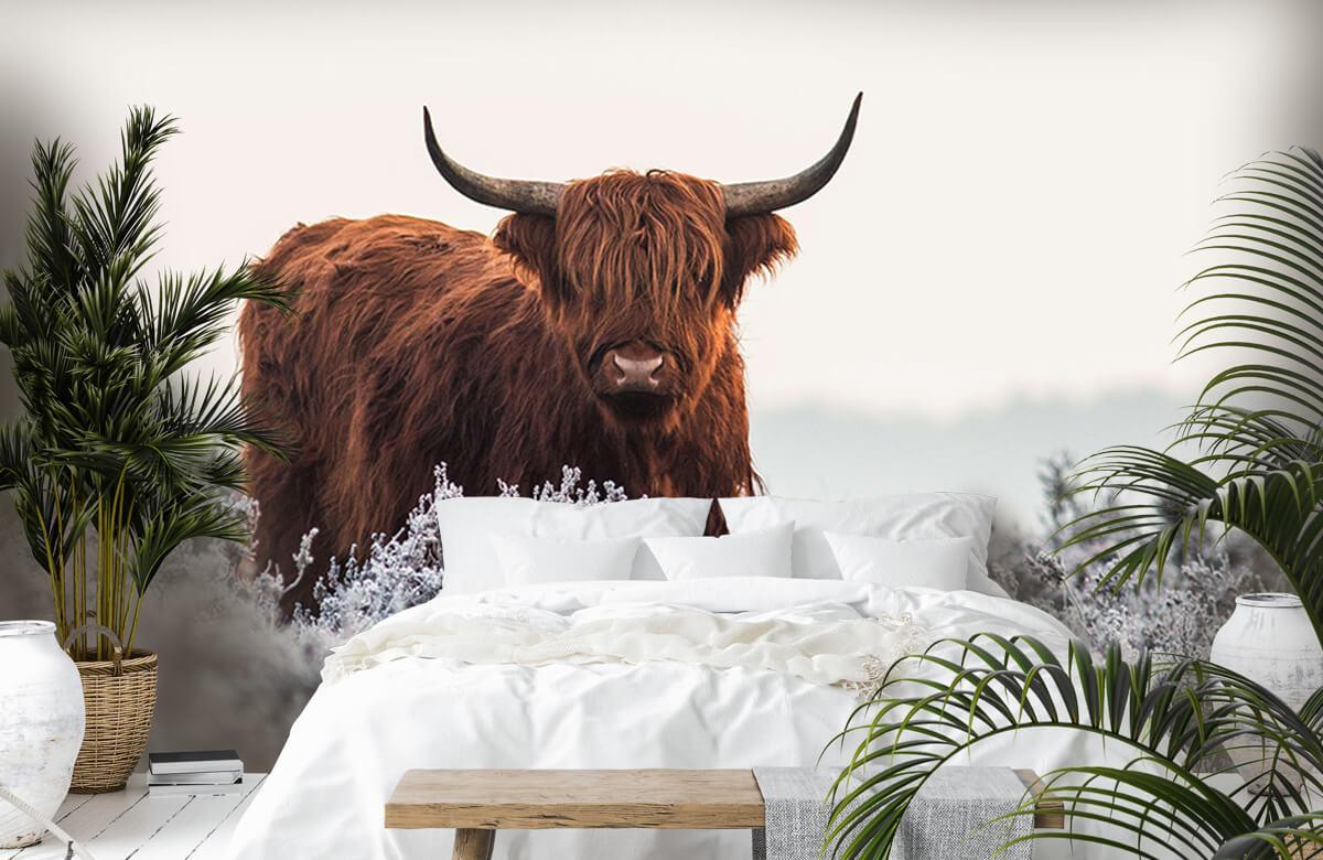 Dieren Highlander 2