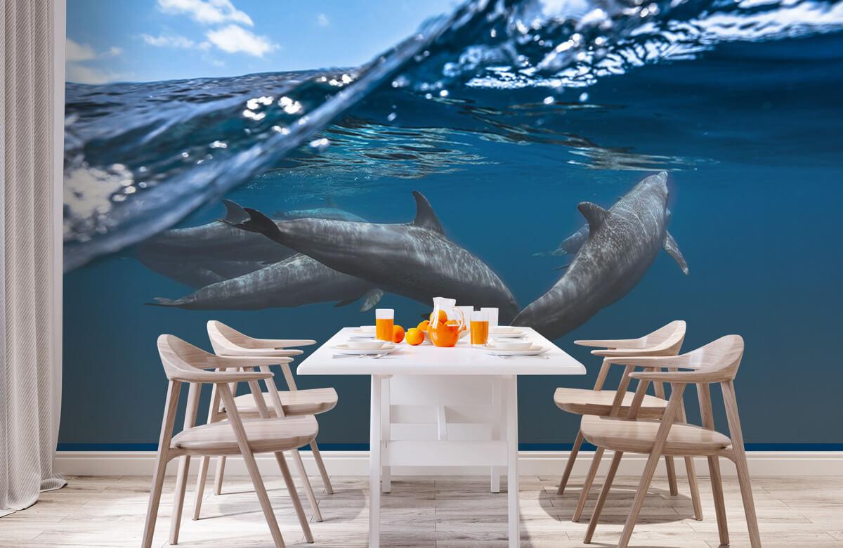 Underwater Dolphins 2
