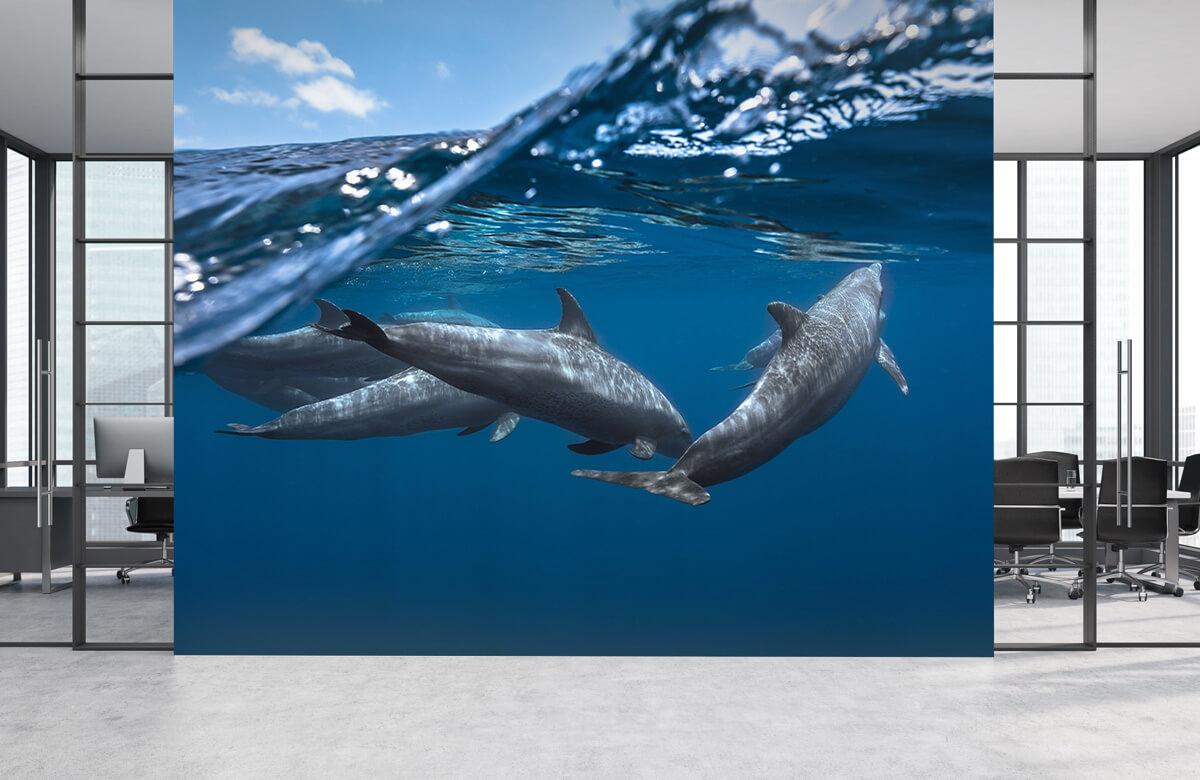 Underwater Dolphins 6