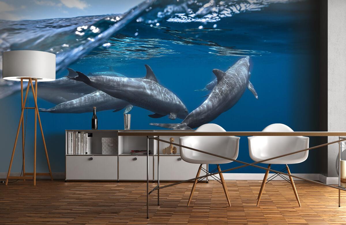 Underwater Dolphins 4