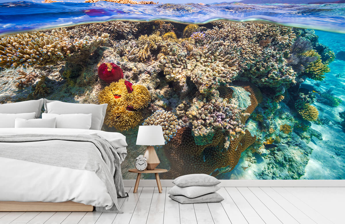 Underwater Mayotte : The Reef 4