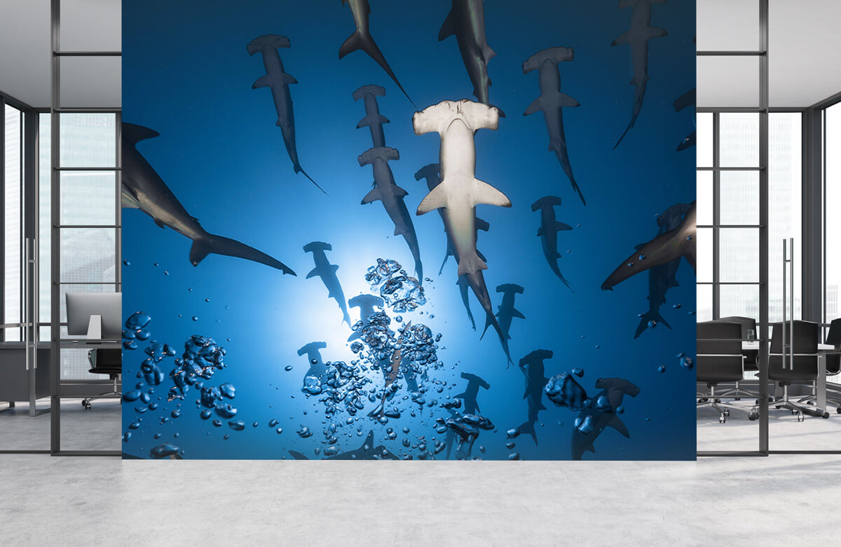 Underwater Hammerhead Shark 7