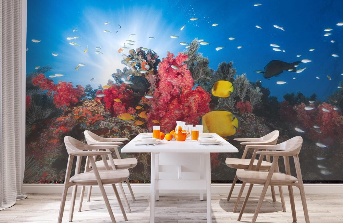 Underwater Reef life 5