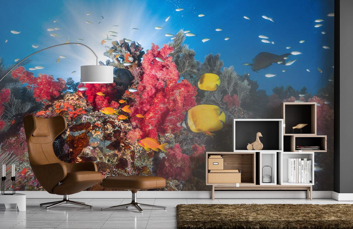 Underwater Reef life 8
