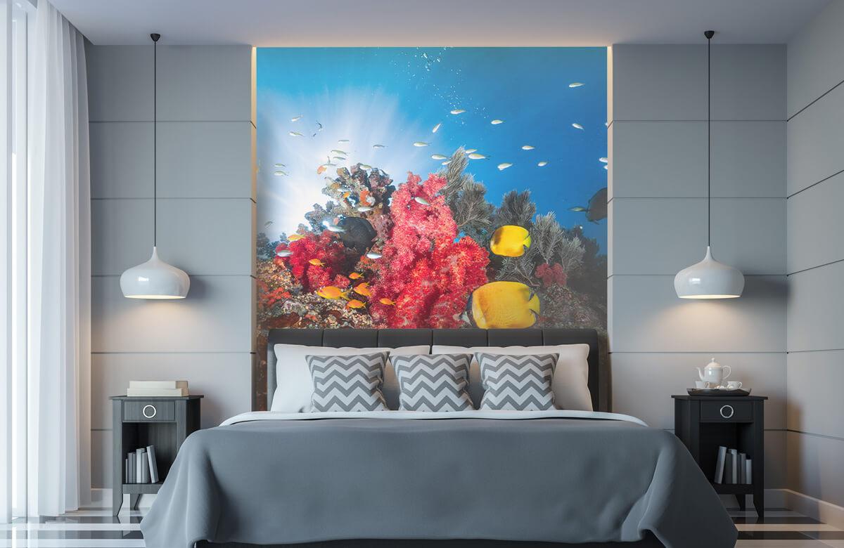 Underwater Reef life 6