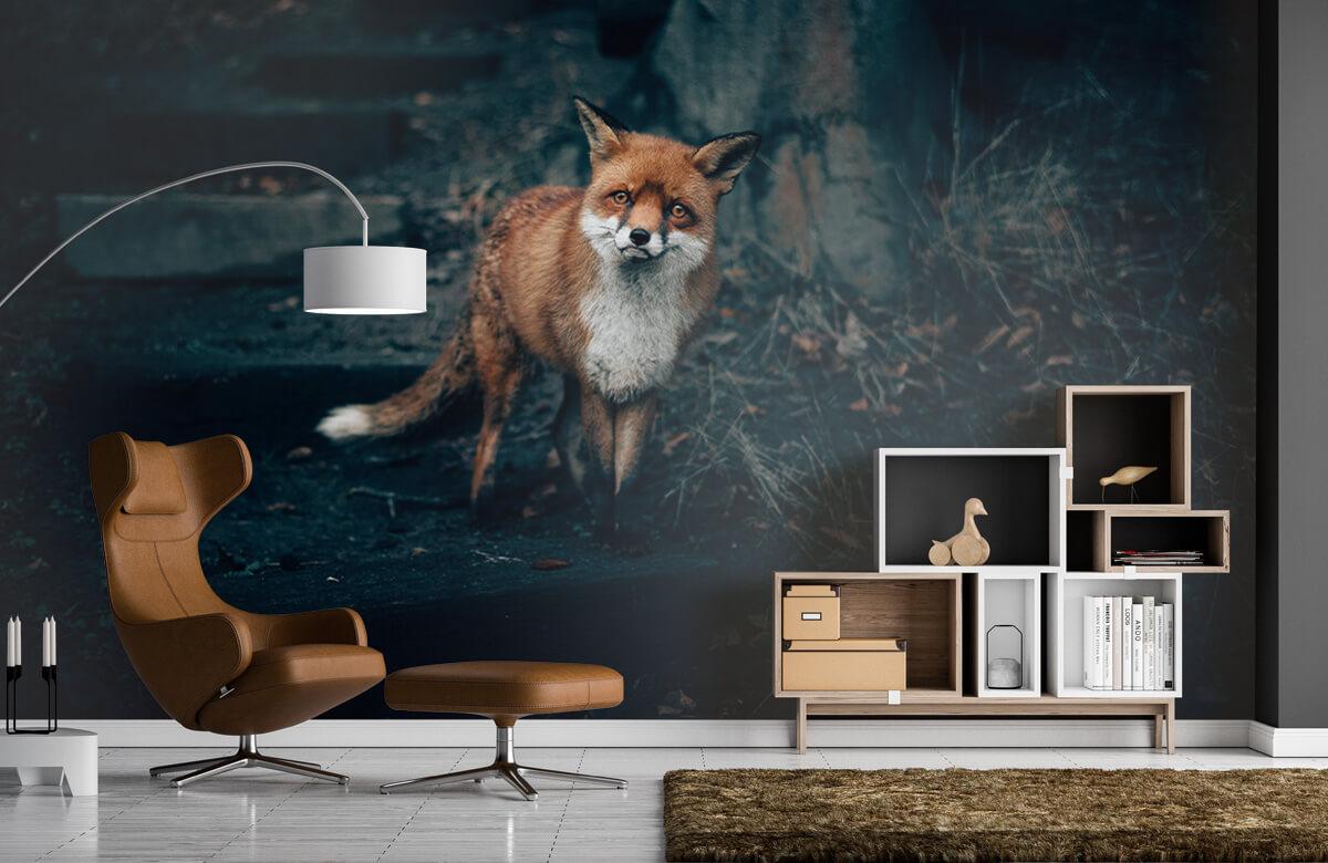 Wallpaper Nyfiken rävskotsk höglandare 5