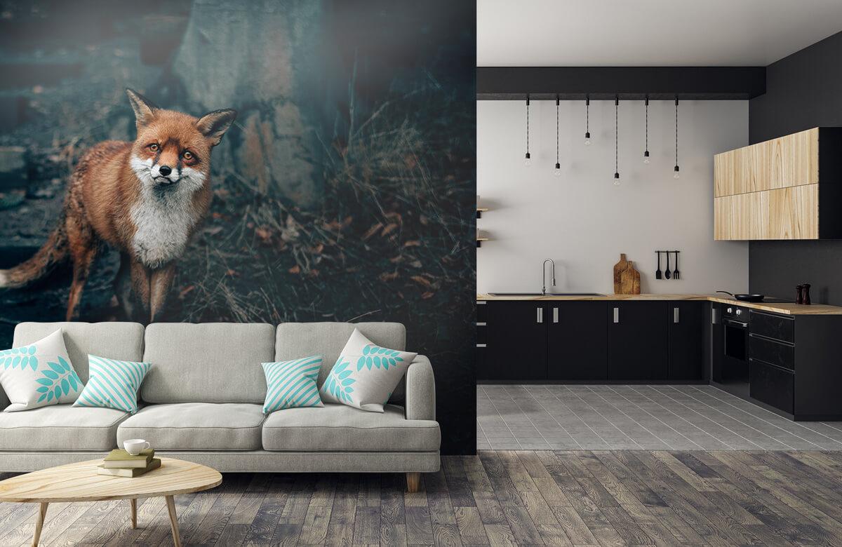 Wallpaper Nyfiken rävskotsk höglandare 10