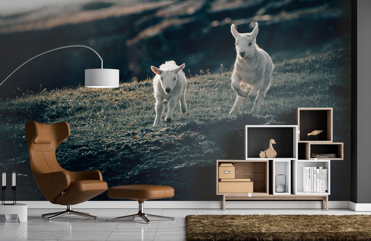 Wallpaper Leker lamm 10