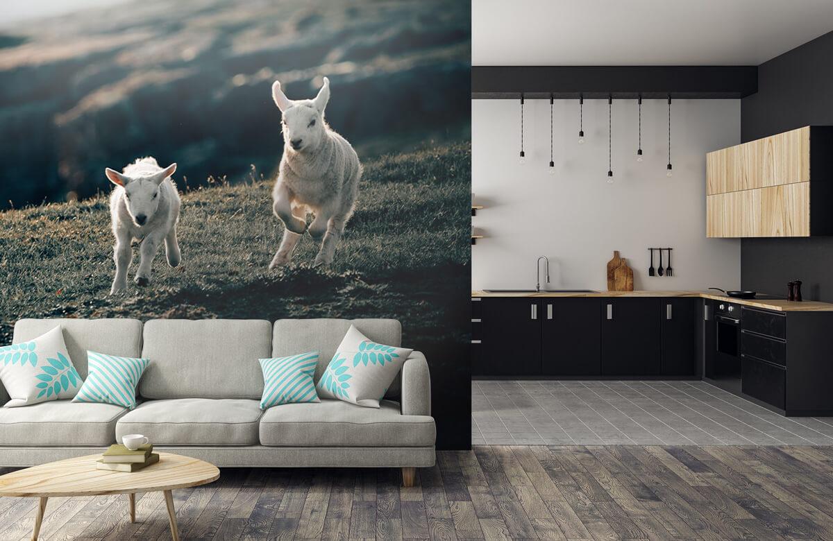 Wallpaper Leker lamm 3