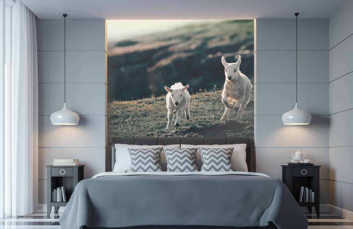 Wallpaper Leker lamm 11