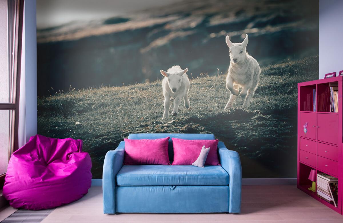 Wallpaper Leker lamm 1