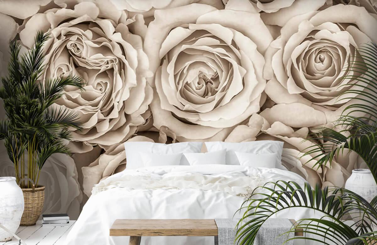 Bakgrund för rosor 8